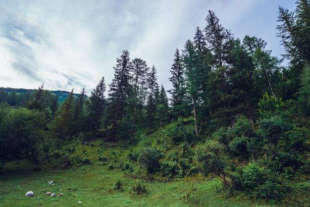丘の上に古い高い松とトウヒのある濃い緑色の風景