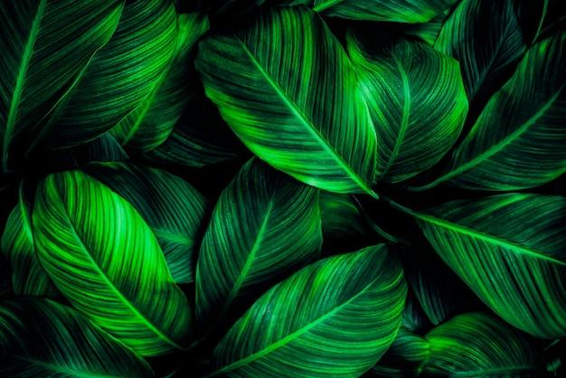 짙은 녹색 잎 패턴 열대 자연 배경