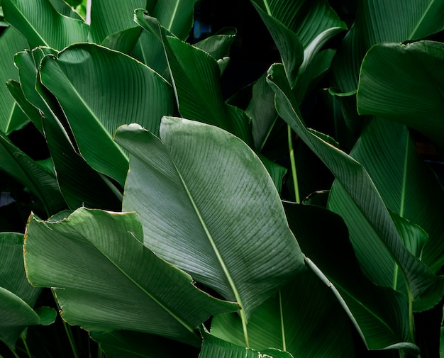 Dark green leaf texture background