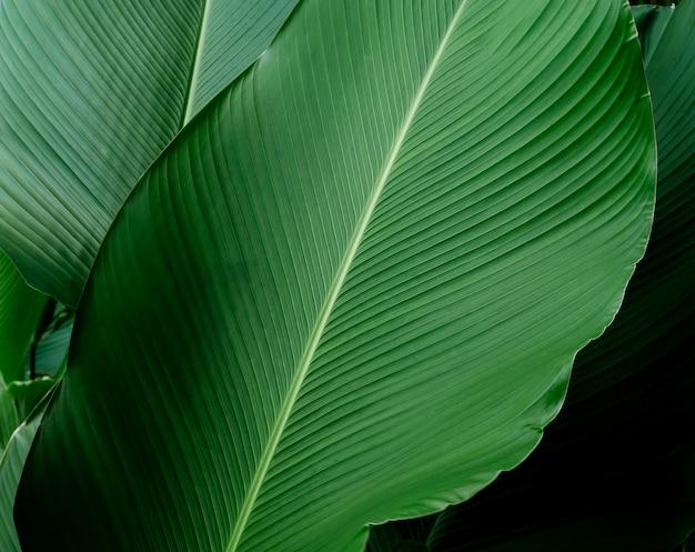 Dark green leaf in tropical jungle nature