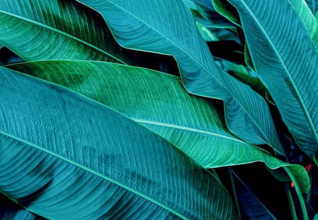 Dark green leaf in tropical jungle nature