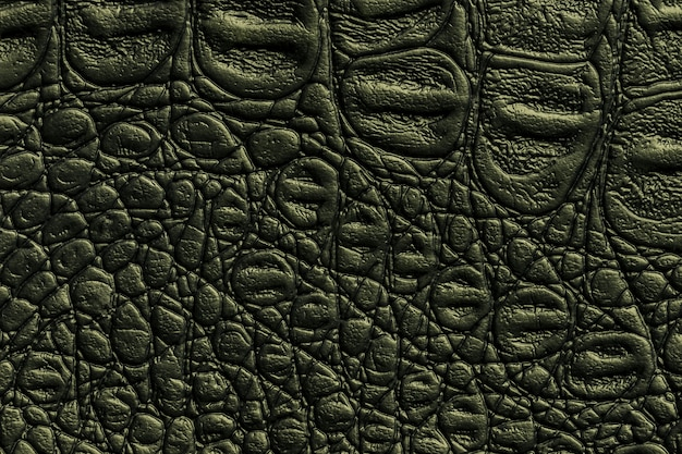 Dark green leather texture, closeup. reptile olive skin, macro. nature structure of textile.