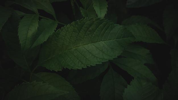 濃い緑の葉の背景抽象的な緑のテクスチャ、自然の背景、熱帯の葉