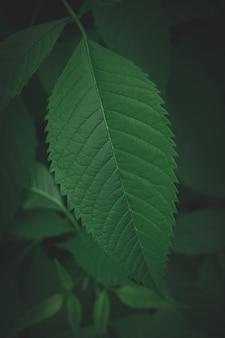 濃い緑の葉の背景抽象的な緑のテクスチャ