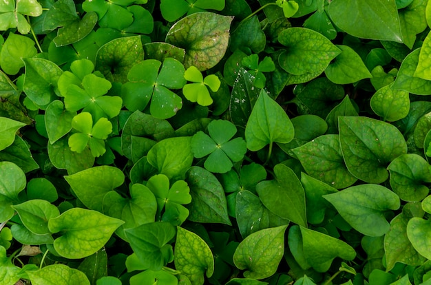 Dark and green leaves background, fresh condition