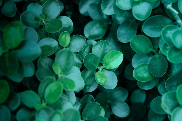 Темно-зеленые листья фон