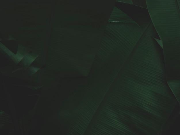 熱帯雨林の自然の背景に濃い緑の葉