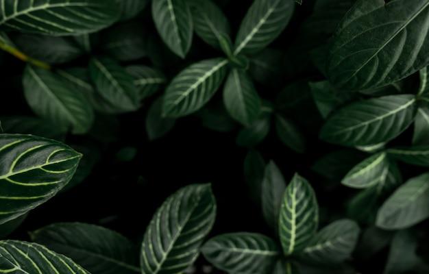 濃い緑の葉のテクスチャ背景