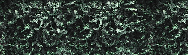 Dark green leaves wall background