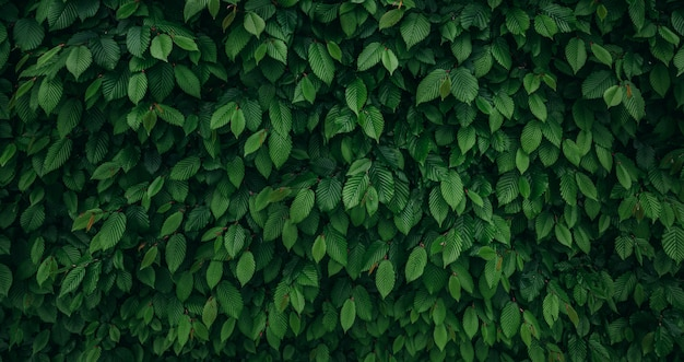 Dark green natural wall wide background with copy space