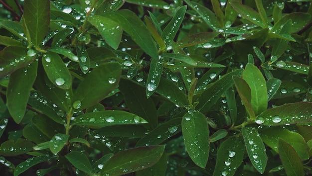 雨上がりの水滴が多い濃い緑色の植物の葉