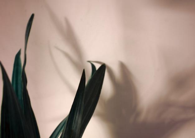 Темно-зеленые тропические листья растения с наложением теневого силуэта на серой теплой нейтральной стене