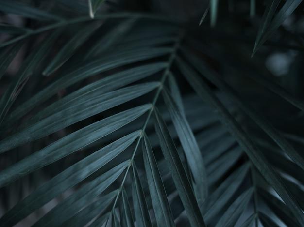 Dark green tropical palm leaves