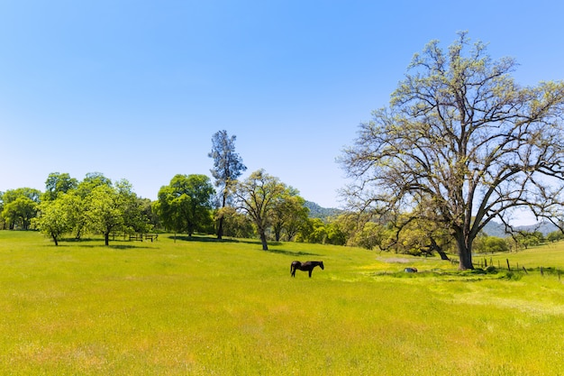 Dark horse in california meadows grasslands