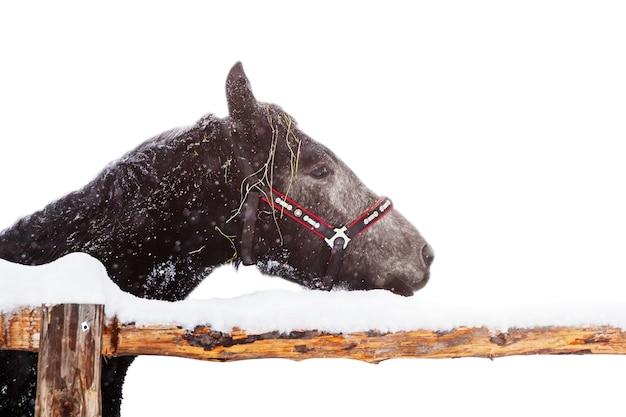 Темная лошадь зимой стоит в загоне в снегопаде, изолированные
