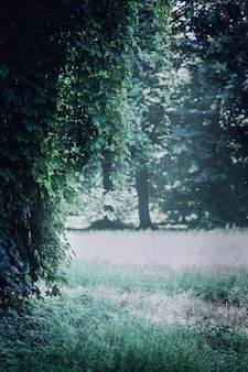공원에서 야생 포도와 어두운 풍경