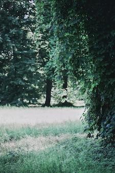 Темный пейзаж с диким виноградом в парке