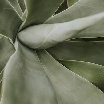 Dark leaf background jungle aesthetic for instagram post