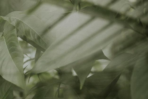 어두운 잎 배경 벽지, 미적 풀 hd 이미지