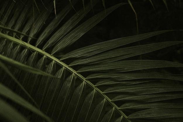 Темный лист фон обои, эстетическое изображение full hd