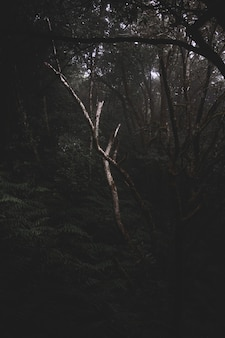 Dark mysterious forest full of different kinds of plants