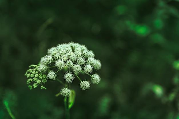 緑の葉と暗い自然の背景