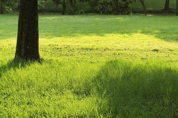 Dark old tree base with nature green grass copy space background