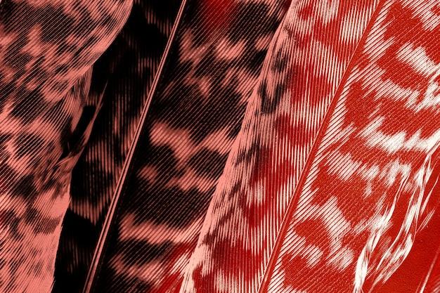 Темно-оранжевый фон листьев калатеи зебрина