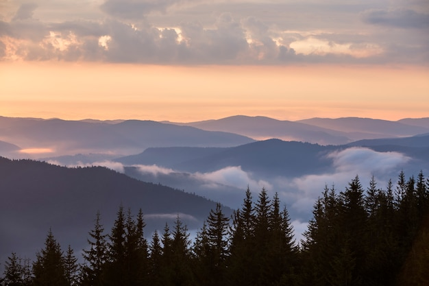 Dark pine tree tops on mountains, foggy valleys and pink sky at sunrise