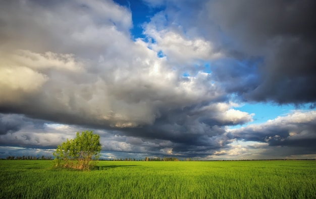 Dark rainy clouds, field with green wheat and lonely tree