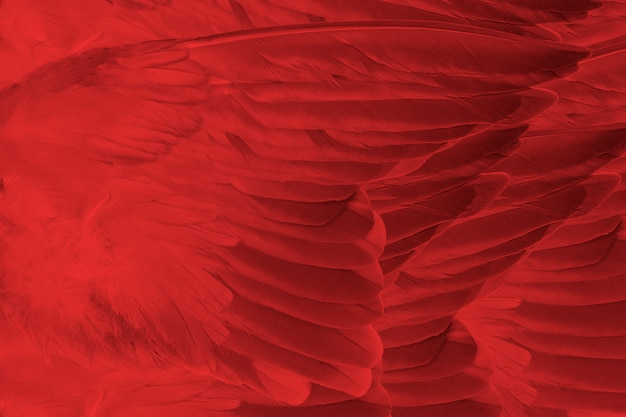 暗い赤い羽テクスチャ背景