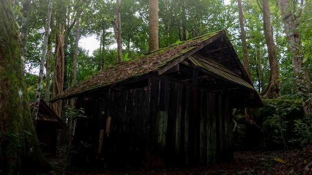 Dark, scary cottage in the forest