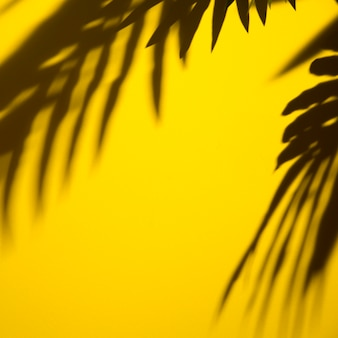 Dark shadow of leaves on yellow background