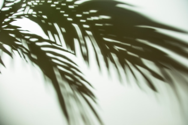 Dark shadow of palm leaves on background