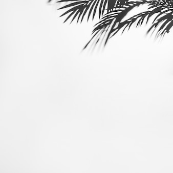Dark shadow of palm leaves on white backdrop