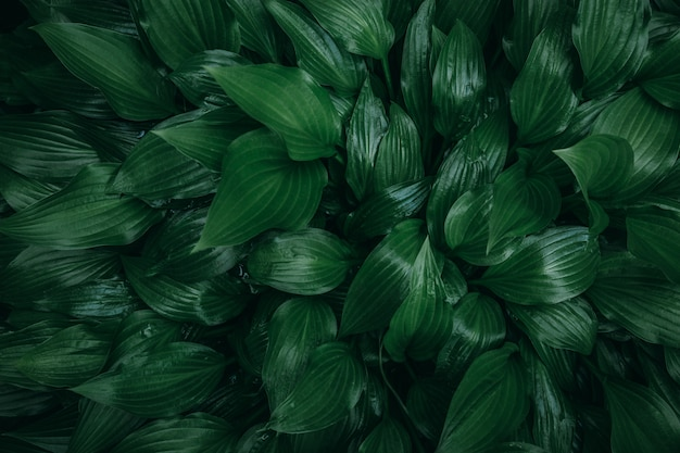 Dark shiny green lush rainforest leaves background texture. copy space.