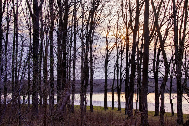 Dark silhouettes of trees on the background of the river and the sky during the sunset