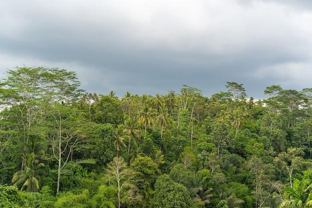 비가 오기 전의 어두운 하늘, 발리의 이국적인 정글에서 자라는 녹색 식물 스톡 사진