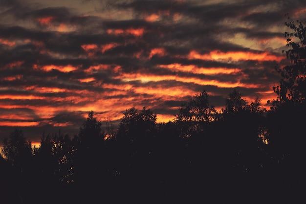 숲의 실루엣과 어두운 일몰입니다. 하늘은 파도가 그 위에 떠있는 것처럼 매우 늑골이 있습니다. 여름 저녁입니다.