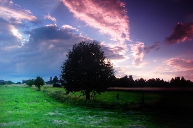 牧草地で暗い木