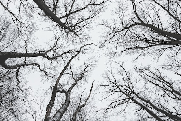 Dark trees, arranged in a circle, without leaves on dark sky