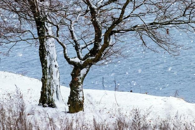 Темные деревья у реки во время снегопада, зимний вид