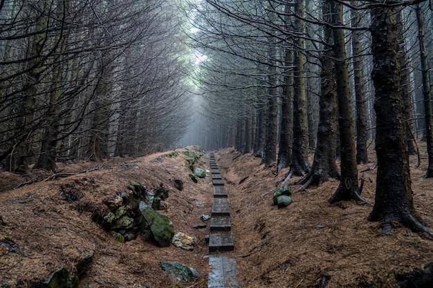 Темный путь с деревьями без листьев и небольшим количеством тумана в пути уиклоу.