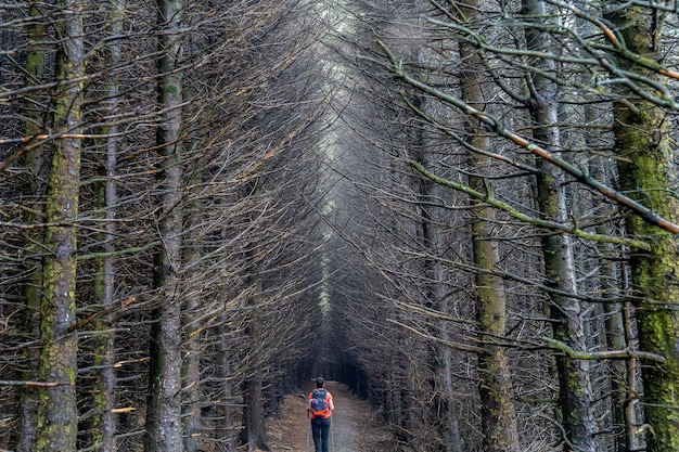 Dark way with trees without leaves in wicklow way.