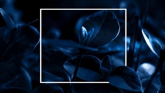 Dark with leaves, white frame