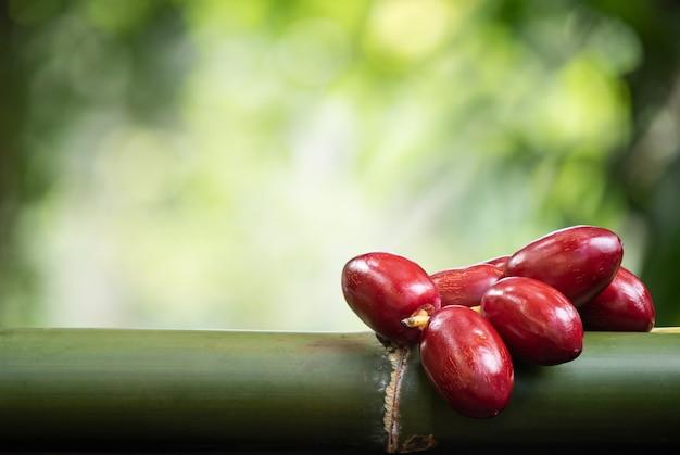 ボケ味の自然の表面にナツメヤシの果実の果実。