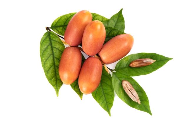 白い背景に分離されたナツメヤシの果実。上面図、フラットレイ。