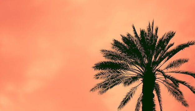 Date palm tree against  colorful sunset sky.