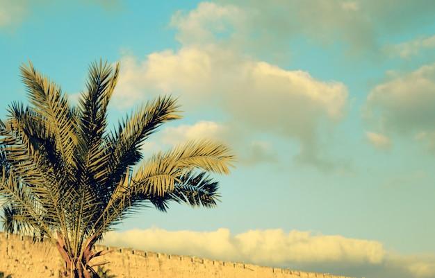 空に対してナツメヤシの木