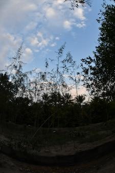 甘い食用果実で栽培されているナツメヤシ科のナツメヤシ